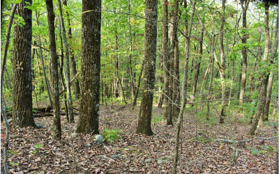 Ellijay Residential Lots & Land For Sale: 9.69a S Piney Spur