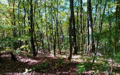 Ellijay Residential Lots & Land For Sale: Lt 10 Liberty Trail