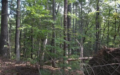Ellijay Residential Lots & Land For Sale: Fawn