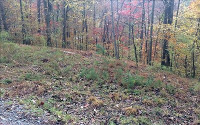 Ellijay Residential Lots & Land For Sale: C181 9th Street