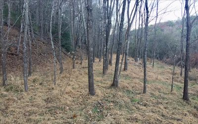 Residential Lots & Land For Sale: Lot 4 Prospectors Cove