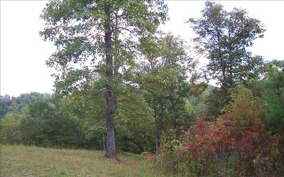 Mineral Bluff GA Residential Lots & Land For Sale: $25,000