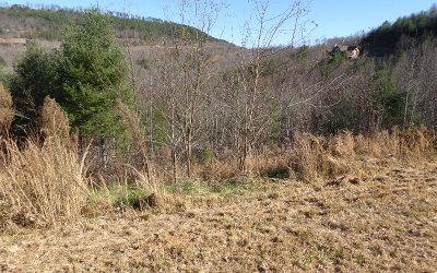 Blairsville Residential Lots & Land For Sale: Lt207 Riverside Lk Nottley