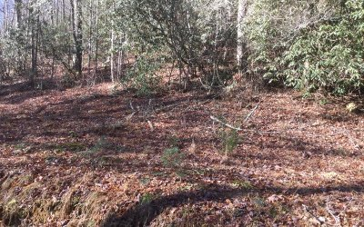 Towns County Residential Lots & Land For Sale: B 5 Soapstone Creek Circ