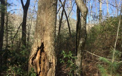 Towns County Residential Lots & Land For Sale: C 16 Kings Knob Bluff Trl