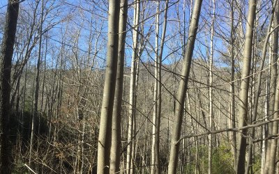 Towns County Residential Lots & Land For Sale: C 3 Kings Knob Trl