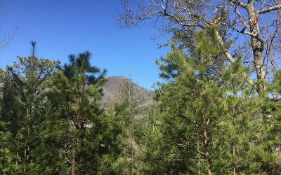 Towns County Residential Lots & Land For Sale: E 40 Timber Ridge Court