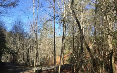 Towns County Residential Lots & Land For Sale: E 52 Chattahoochee Forest