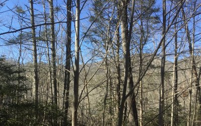 Towns County Residential Lots & Land For Sale: E 15 Timber Ridge Trail