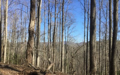 Towns County Residential Lots & Land For Sale: B 11 Soapstone Creek Circ