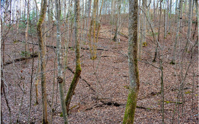 Ellijay Residential Lots & Land For Sale: L1014 Gibe Ct