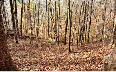 Ellijay Residential Lots & Land For Sale: L 682 Julep Circle