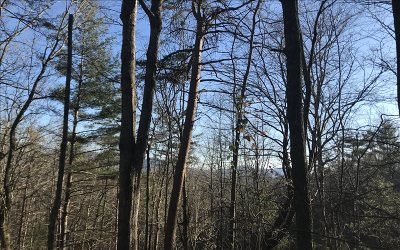 Ellijay Residential Lots & Land For Sale: Lt507 Chickasaw Dr.