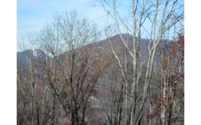 Hiawassee GA Residential Lots & Land For Sale: $17,500