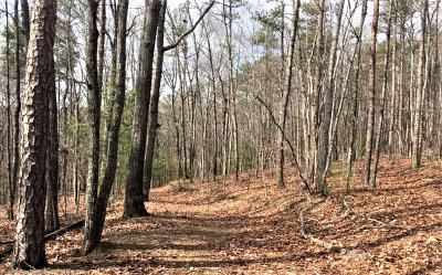 Ellijay Residential Lots & Land For Sale: Lt 15 Pension Rd