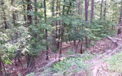 Ellijay Residential Lots & Land For Sale: 939+ Myna Drive