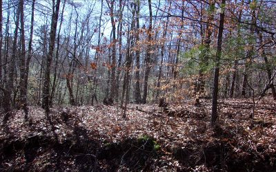 Fannin County Residential Lots & Land For Sale: Left Turn