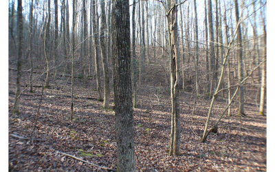 Ellijay Residential Lots & Land For Sale: Skyview Dr M102-103