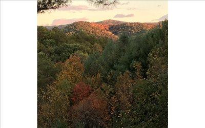 Blue Ridge Single Family Home For Sale: 117 Horse Trail