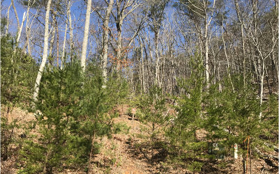 Young Harris Residential Lots & Land For Sale: #26 Eagles Chase