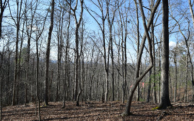 Ellijay Residential Lots & Land For Sale: L1671 Motif Ct