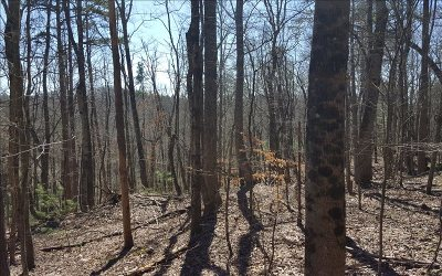 Ellijay Residential Lots & Land For Sale: 27, 28 Ridge View Dr