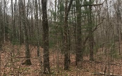Fannin County Residential Lots & Land For Sale: Lt 126 Laurel Trace