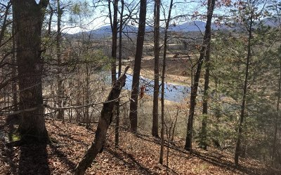 Blairsville Residential Lots & Land For Sale: Lt D Bee Tree Lane
