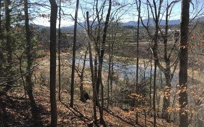 Blairsville Residential Lots & Land For Sale: Lt Ef Bee Tree Lane