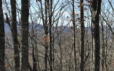Young Harris Residential Lots & Land For Sale: 45&46 Dogwood Circle