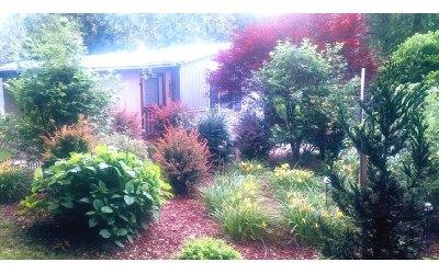 Blue Ridge Single Family Home For Sale: 250 Harmony Lane