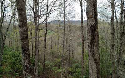 Brasstown Residential Lots & Land For Sale: 3 Willow Ridge