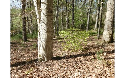 Blairsville GA Residential Lots & Land For Sale: $19,900