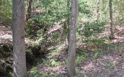 Hayesville Residential Lots & Land For Sale: 39-40 Shelton Springs