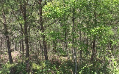 Young Harris Residential Lots & Land For Sale: Lt 25 Brookhaven