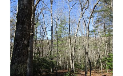 Blairsville GA Residential Lots & Land For Sale: $49,900