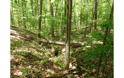 Blairsville GA Residential Lots & Land For Sale: $89,900