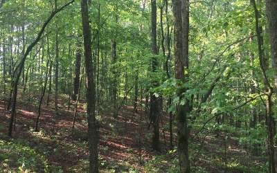 Ellijay Residential Lots & Land For Sale: Ridgeway Church Road