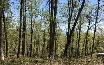 Ellijay Residential Lots & Land For Sale: M148 Walnut Ridge