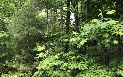 Suches Residential Lots & Land For Sale: Hemlock Heights L56