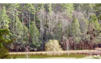 Mineral Bluff Residential Lots & Land For Sale: 8.74 Nauture's Courtyard