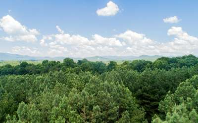 Ellijay Residential Lots & Land For Sale: Lt34 Foxpaw Leaf Ln