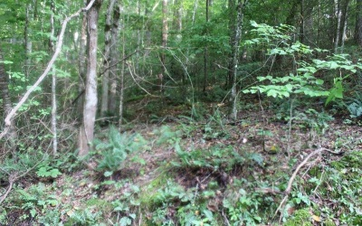 Ellijay Residential Lots & Land For Sale: Lemmon Lane - Lt 349