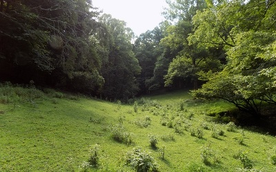 Marble Residential Lots & Land For Sale: Cb Newton Road