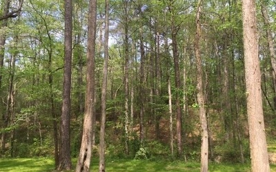 Jasper Residential Lots & Land For Sale: 2.79 Ac Indian Forest Rd
