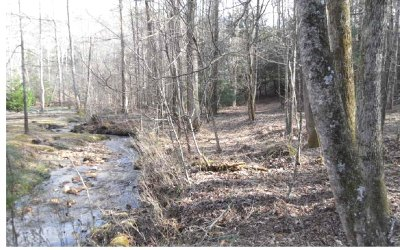 Ellijay Residential Lots & Land For Sale: 3 Ac Molly's Way