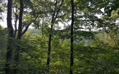 Ellijay Residential Lots & Land For Sale: Lt19 Mountian Falls Loop