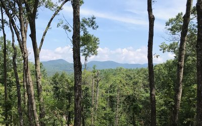 Blue Ridge Single Family Home For Sale: Tr 16 Aska Forest Trail