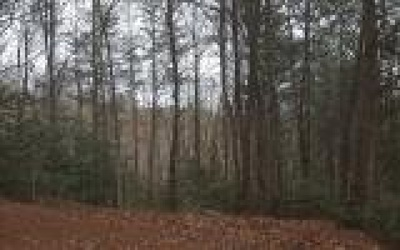 Brasstown Residential Lots & Land For Sale: Lot 4 Willow Ridge