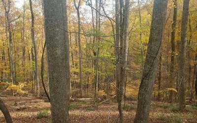 Ellijay Residential Lots & Land For Sale: L-H89 Walnut Mountain